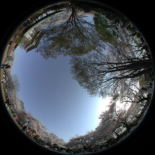 cherry_fisheye_image