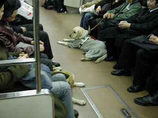 dog_in_train