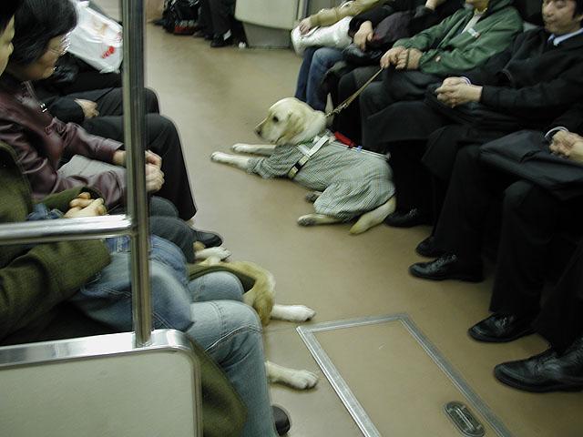 dog_in_train