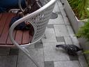 pigeon_un_chair