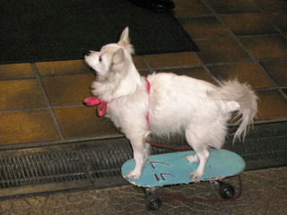 skate_dog02