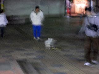 skate_dog1