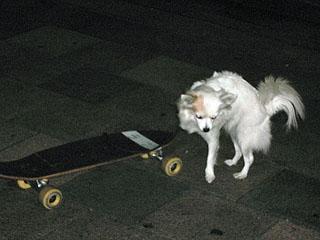skate_dog2