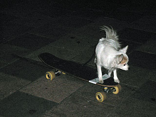 skate_dog3