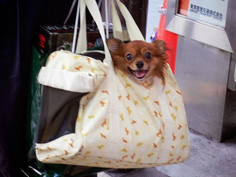 Dog_in_bag2