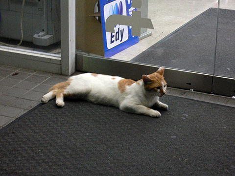 Cat_on_cv