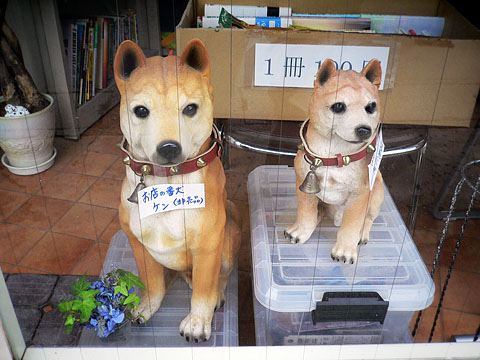 Fake_dog