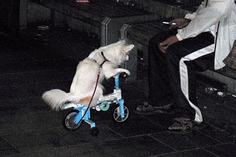 Riding_dog